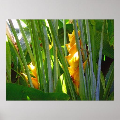 Heliconia hawaiano impresiones