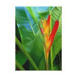 Heliconia hawaiano lona envuelta para galerias