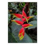 Heliconia hawaiano tarjeta de felicitación