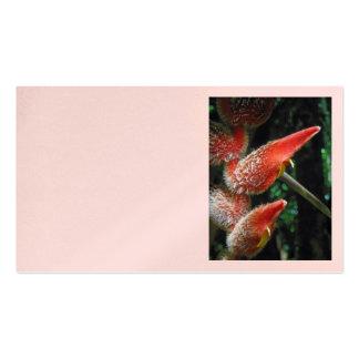 Heliconia hawaiano tarjetas de visita