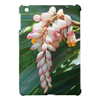 Heliconia Hawai'i