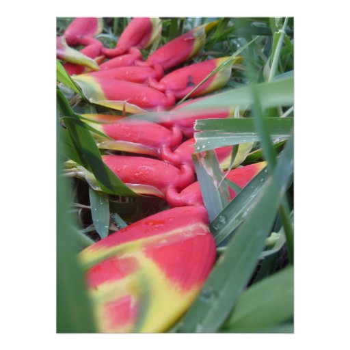 Heliconia In The Grass Print