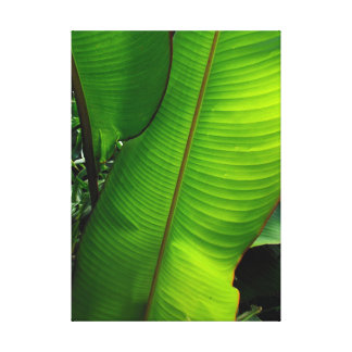 Heliconia Leaves Stretched Canvas Prints