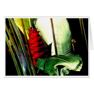 Heliconia No. 1 Card