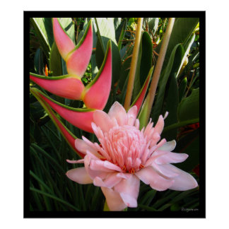 Heliconia Pink Torch Ginger Hawaiian Poster Prints Poster