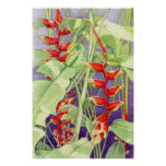 Heliconia Poster