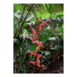 Heliconia Póster