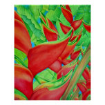 Heliconia rojo poster