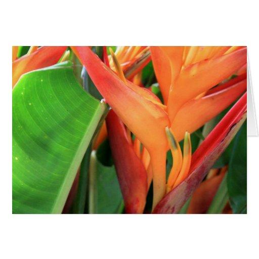 Heliconia tropical brillante floral tarjeta de felicitación