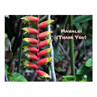 Heliconia Tropical Flower Thank You Postcard