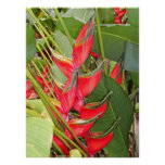 Heliconia tropical posters