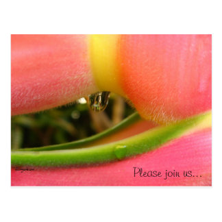 HeliconiaTropical Save the Date Wedding Cards