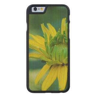 Heliopsis Flowers Carved® Maple iPhone 6 Slim Case