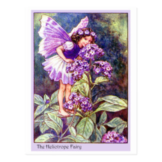 Heliotrope Fairy Postcard