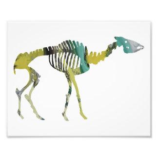 helladotherium skeleton photo print