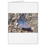 Hellblauer Schmetterling Karte