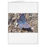 Hellblauer Schmetterling Tarjeta De Felicitación