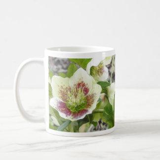 Hellebores alegres en el jardín de la primavera taza de café