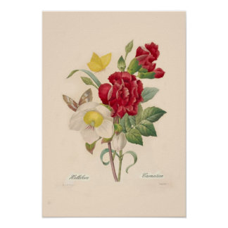 Hellebores and Carnations Poster