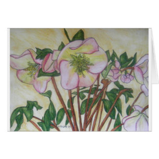 Hellebores XII Greeting Cards