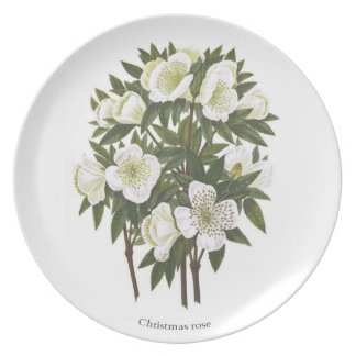 Helleborus niger Christmas Rose Plate
