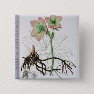 Helleborus Niger from 'Phytographie Medicale' by J Pinback Button