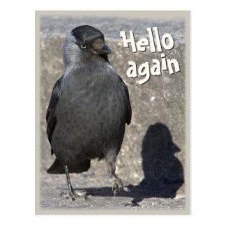 Hello again CC0518 Jackdaw Postcard