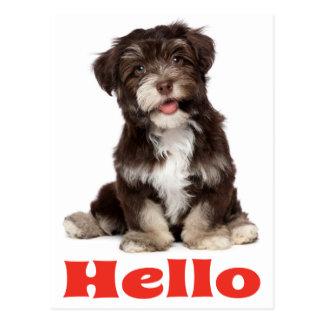 Hello Black And White Havanese Puppy Dog Postcard