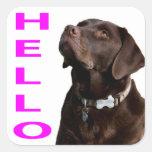 Hello Black Brown Labrador Retriever Sticker Label
