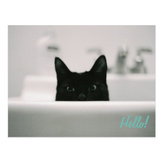 Hello Black Cat in Sink Postcard