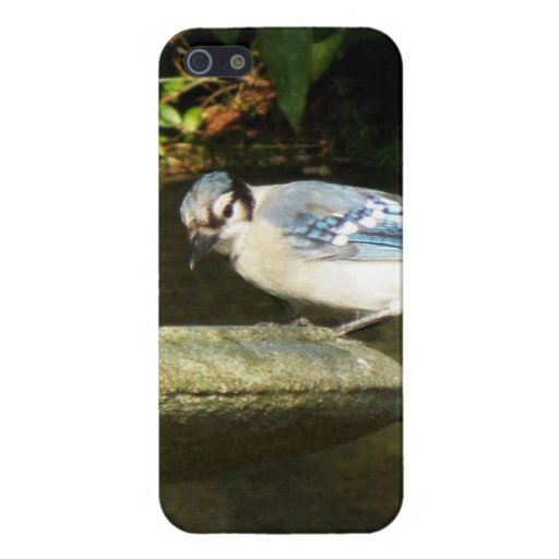 Hello blue jay iPhone case iPhone 5 Covers