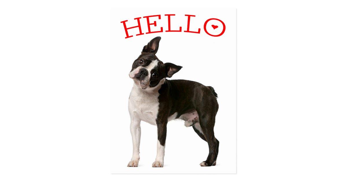 B Is For Boston Terrier Hello Boston Terrier P...