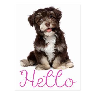Hello Brown And White Havanese Puppy Dog Postcard