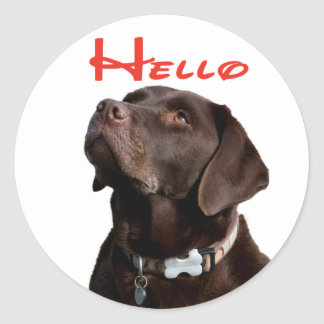 Hello Brown Chocolate Labrador Retriever Puppy Dog Classic Round Sticker