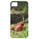 Hello Cardinal iPhone 5 Cover