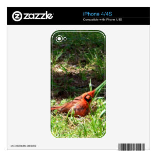 Hello Cardinal Skins For iPhone 4S