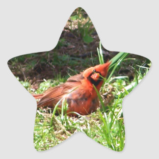 Hello Cardinal Star Sticker