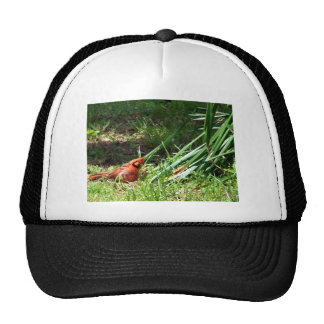 Hello Cardinal Trucker Hat