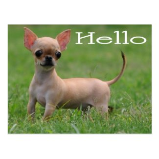 Hello Chihuahua Puppy Dog Post Card
