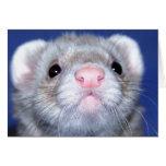 HELLO! Close-up of a curious ferret Cards