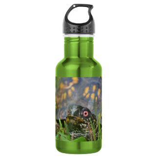 Hello! Curious Turtle Stainless Steel Water Bottle
