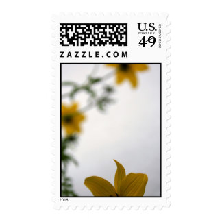 Hello - Customizable Stamp - add Your text