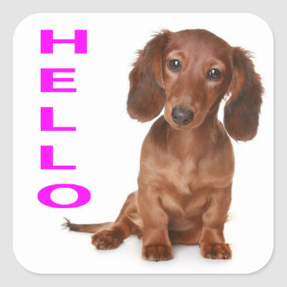 Hello Dachshund Puppy Dog Sticker / Seal