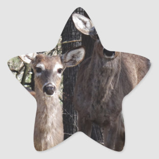Hello Deery Star Sticker