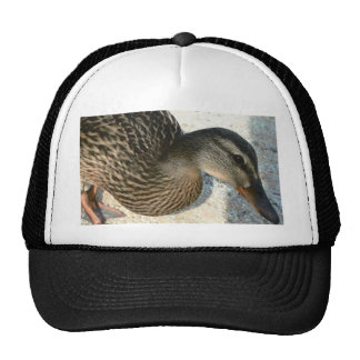 Hello Ducky Trucker Hat
