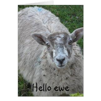 Hello Ewe Greeting Card