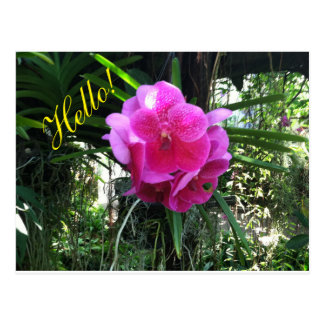 Hello Flower Postcard