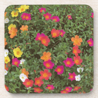Hello Flowers Coaster