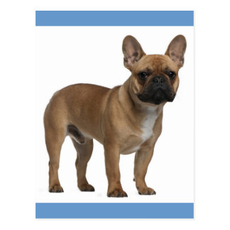 Hello French Bulldog Puppy Dog Post Card