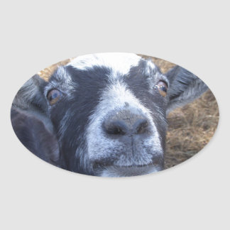 Hello Friendly Goat Oval Sticker